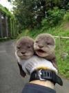 コツメカワウソの赤ちゃんの成長過程が悶絶級のかわいさ 平川動物公園がTwitterに写真を投稿中