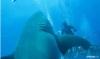 デカすぎてまるで飛行船。観測史上最大の規格外なホホジロザメ
