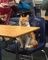 ニャンですと! アメリカの高校にネコが入学 学生証も発行され正式な「ネコ生徒」に