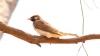 研究者もびっくり。一見、ふつうの鳥だけど...