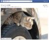 エンジンルームやボンネットに猫が入り込む季節 日産が乗車前の「猫バンバン」を呼びかける