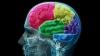 大人になってからでも脳細胞を育てることができる、「神経新生」のメカニズムを科学者が解説