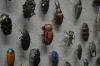昆虫の標本の中に…あれ、なんか違うの混ざってないか?