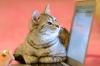 仕事中に「ネコ動画」を見ても生産性は落ちない:研究結果
