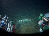 しんかい6500、クジラの遺骸から新種の深海生物41種を発見 「飛び石仮説」解明に一歩