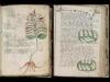 解読不能の奇書「ヴォイニッチ手稿」が電子書籍化され誰でもダウンロード可能に