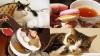 猫カフェと本気のアフタヌーンティーが融合した優雅すぎる空間「Lady Dinah's Cat Emporium」で猫欲と食欲を満たしてきました