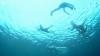 イルカのように泳ぎ「海の遊牧民」となっている子どもたちの実態に迫る