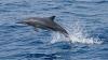 イルカの「会話」が地球外知的生命体からのメッセージの探索に大きく関与していた